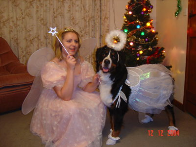 Philippa & Sophie as Fairies.  These two won 1st prize at the Southern Bernese Mountain Dog Club Christmas Party Fancy Dress Class Christmas 2004