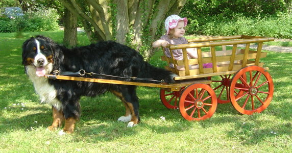 Harvey at two years pulling his Swiss cart with Chloe at 18 months