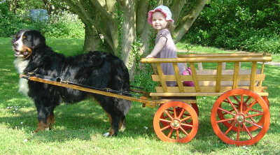 Sophie at 4½ with Chloe hitching a ride at 21 months
