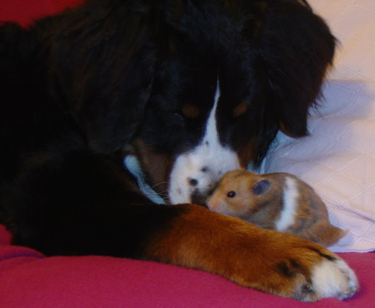 Sophie Bernese with Hamish the Hamster