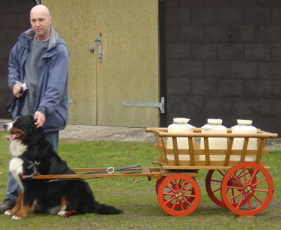 Mervyn with Sophie pulling our Traditional Swiss cart